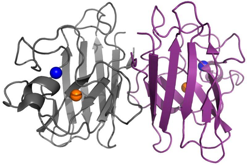 ALS Research Forum   Next-Gen Antisense and Small Molecule
