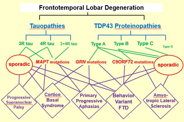 How do you run trials in this? Most clinical types of FTD can have one of several underlying pathologies. Mutations in a given gene lead to different clinical diseases. [Courtesy of David Knopman and Dennis Dickson.]