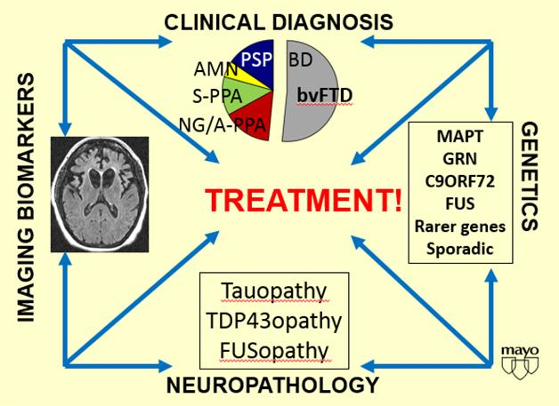 Frontotemporal dementias all feature neurodegeneration in the front and side of the brain (left); beyond that, their clinical expression, genetic origin, and underlying protein pathologies are highly heterogeneous. [Courtesy of David Knopman.]